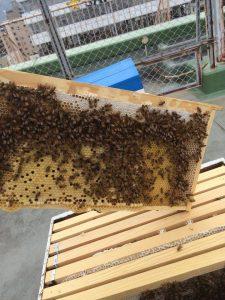蜜蜂たちは元気にはちみつを集めていました♪
